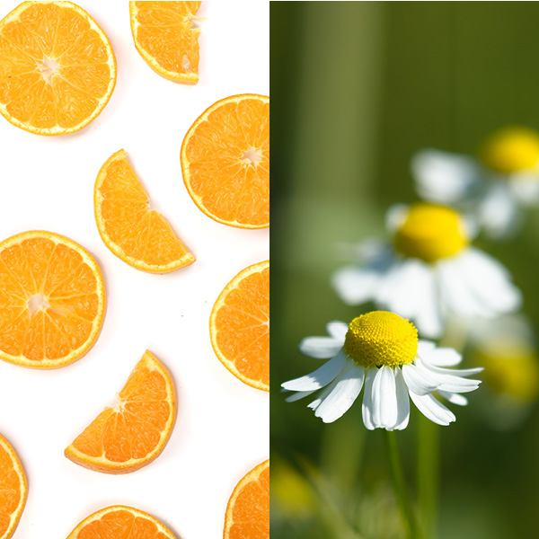 Orange Blossom Chamomile Fragrance Oil Orange Blossom Chamomile FO