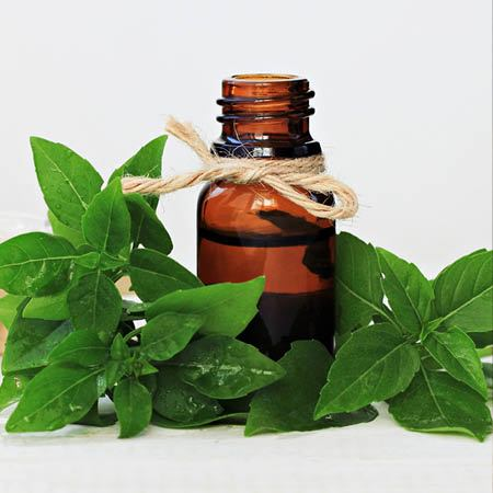 Basil Essential Oil - Sweet - India *