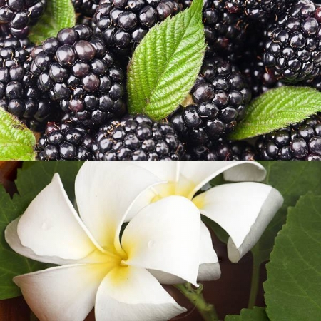 Blackberry Patchouli Fragrance Oil