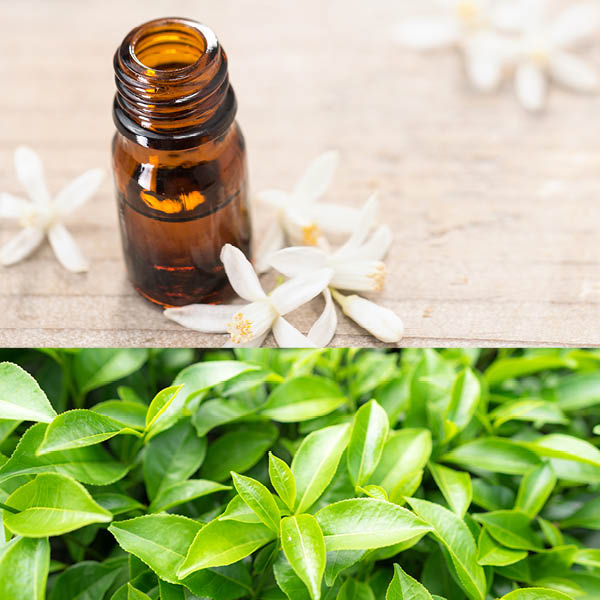 Green Tea Neroli Fragrance Oil