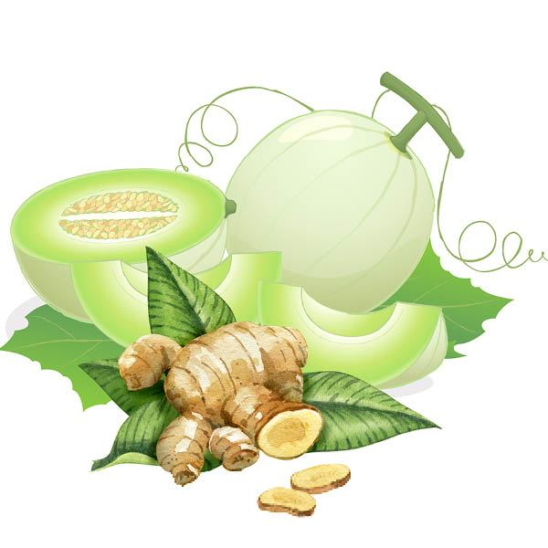 Honeydew Ginger Fragrance Oil