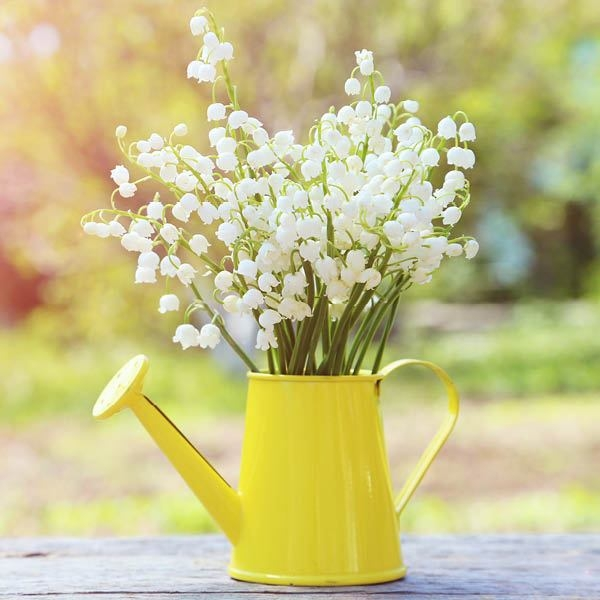 Lily of the Valley II Fragrance Oil