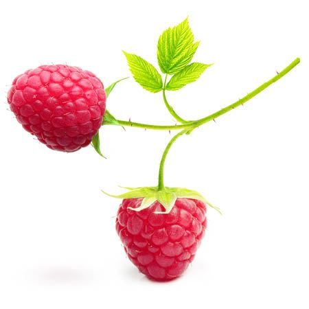 Red Raspberry Seed Oil - Virgin