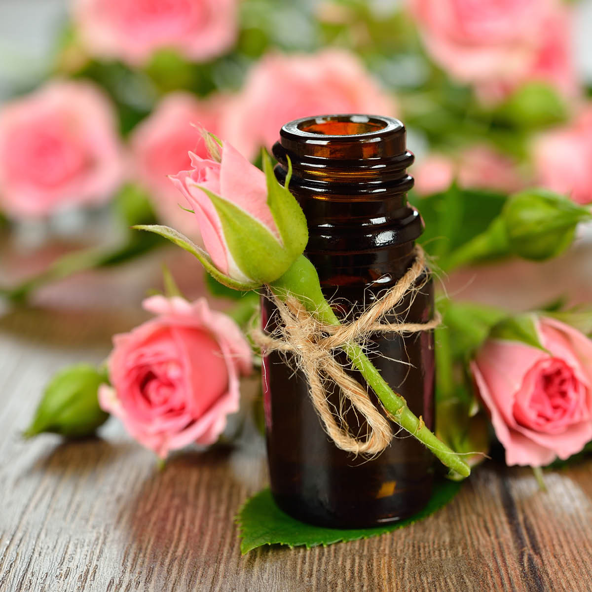 Rose Absolute Essential Oil – Nature Identical
