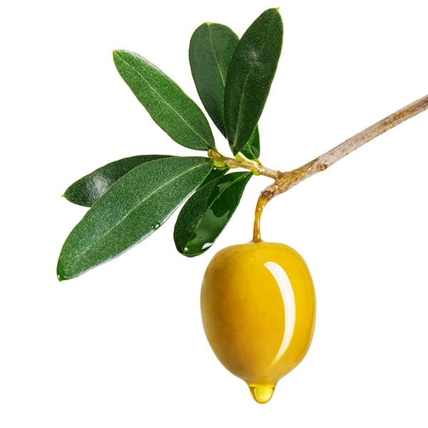 Sweet Olive Fragrance Oil